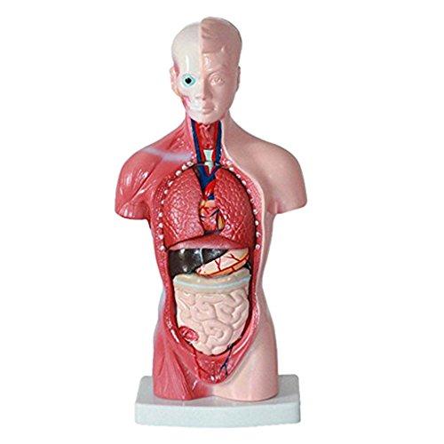 Medizinische Verbrauchsmaterialien für den Rücken kaufen ...