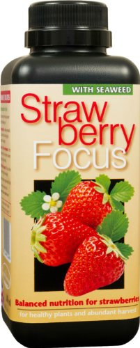 1-litre-strawberry-focus-specialist-fertiliser-for-strawberries-in-pots-or-the-ground