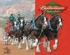 budweiser-clydesdales-tin-wall-sign