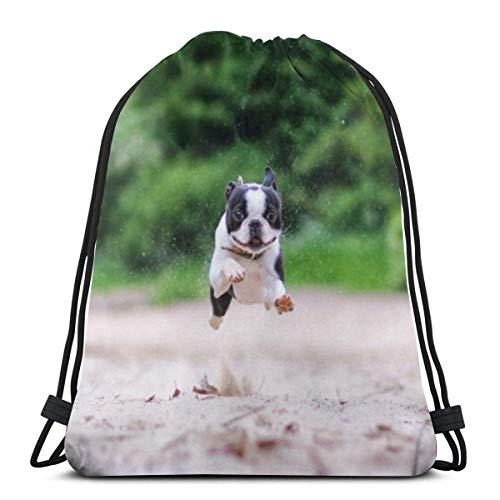 Roue Cute Boston Terriers (14) 3D Print Drawstring Backpack Rucksack Shoulder Bags Gym Bag for Adult 16.9