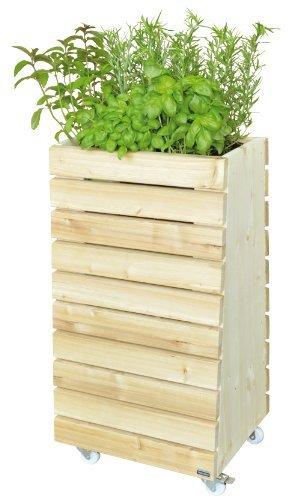 Kiehn-Holz x 50
