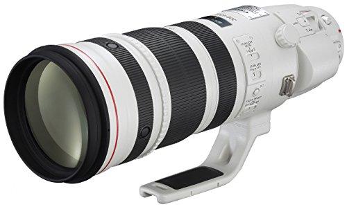 Canon 200-400 mm/F 4,0 EF L is USM Extender 1,4X Objektiv (Canon EF/EF-S-Anschluss,True) Canon Extender
