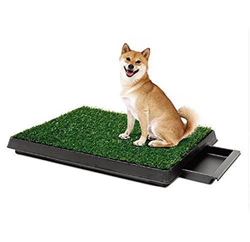 DAN Hundeklo aus echtem Rasen, Welpentoilette, Trainingsunterlage, Hundetoilette