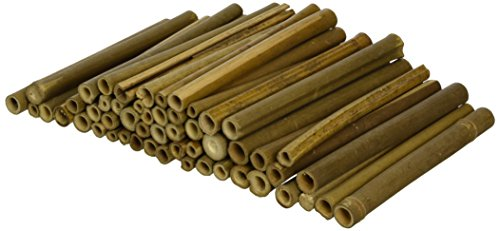 Wildlife World Solitary Bee Tubes Wooden (Pack of 50) Test