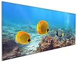 Wallario Küchenrückwand aus Glas, in Premium Qualität, Motiv: Bunte Fische im Meer | Spritzschutz | abwischbar | Pflegeleicht