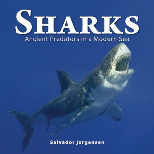 Sharks por Salvador Jorgensen