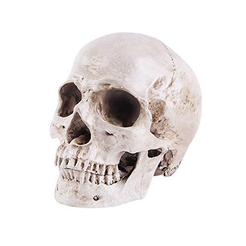 AOLVO Menschlicher Totenkopf Modell 1:1 Lebensgröße Totenkopf Anatomie Modell, klassisch abnehmbar anatomisch Shantou – Hochpräzise Lehrwerkzeug, Halloween-Dekoration