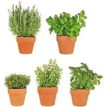Eurographics WS DT6049 Window Sticker All My Herbs 25 X 70 Cm