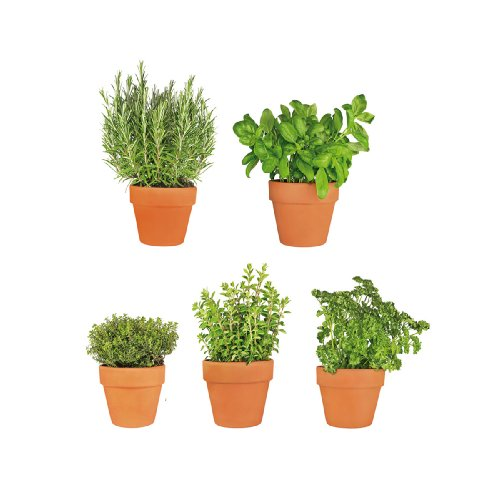 eurographics-window-sticker-25-x-70-cm-ws-dt6049-all-my-herbs