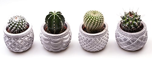 cactus-potted-in-retro-concrete-ceramic-ideal-gift-plant-for-birthdays-and-thank-yous-easy-care-plan