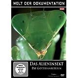 Welt der Dokumentation - Das Alieninsekt - Die Gottesanbeterin