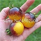 Pinkdose Bonsai 100 PCS/Pack Bonsai di Pomodoro Arcobaleno rari, Semi di ortaggi Ornamentali in Vaso Ornamentali di Frutta Biologica Dolce per la casa & amp; Giardino: 5