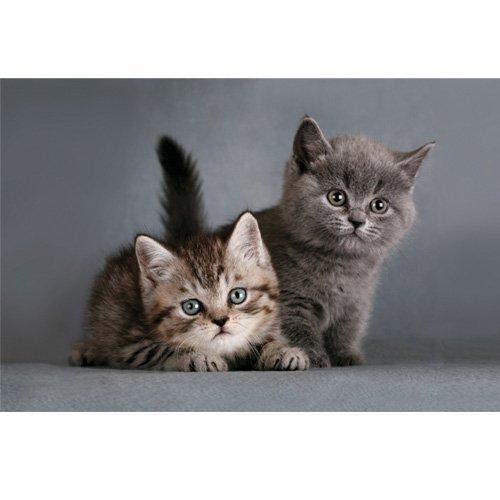 Felpudo Gallery gatos bebé Diseño de 44 x 67 cm