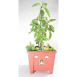 Holy Krishna Tulsi - Kapoor Tulsi (Live Plant)With Pot And Decorative + Laxmi ATM Card