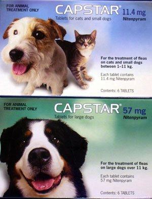 capstar-fa-1-4-r-katzen-und-kleine-hunde-flea-tabletten-einen-artikel