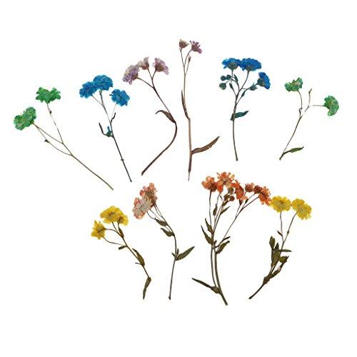 Sharplace 10er Set Trockene Blume Getrocknet Blüten für Nagelkunstdekor Kartenherstellung Scrapbooking DIY Basteln Handwerk - Gänseblümchen