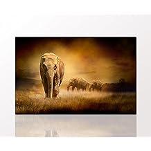 suchergebnis auf f r 2 afrika tierbilder auf leinwand. Black Bedroom Furniture Sets. Home Design Ideas