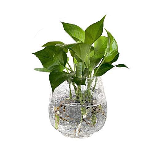 TELLW Jarrón de Cristal Transparente Creativo de bambú con diseño de Flor de Cultivo de Agua