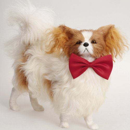 Haustier Hund Katze Fliege Krawatte - rot