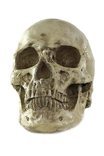 een Totenschädel menschlicher Schädel Skull Gerippe Knochengerippe VQ-057 (Ziemlich Schädel Halloween)