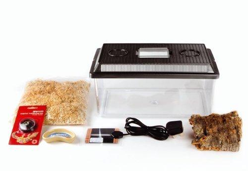 komodo-basic-hatchling-beginner-budget-starter-kit