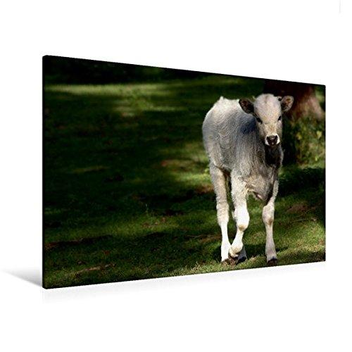 Calvendo Premium Textil-Leinwand 120 cm x 80 cm Quer, Ein Motiv aus Dem Kalender Unsere Lieblinge...