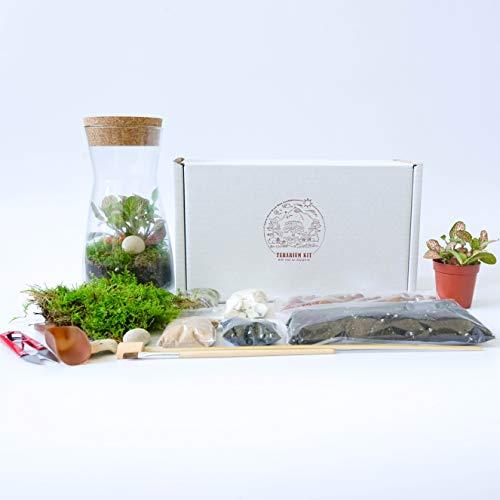 Fittonia Moss Terrarien-Set aus transparentem Glas mit runder Korkdeckel, offen oder geschlossen, für drinnen und draußen, 19 cm Höhe, Complete Set (Fittonia, Moss & Tools)