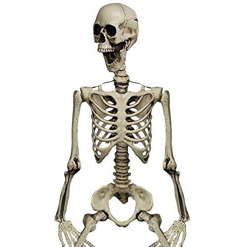 dekoration Beweglich Voller GrößE Menschliches SchäDel-Skelett Anatomisch Weiß ()