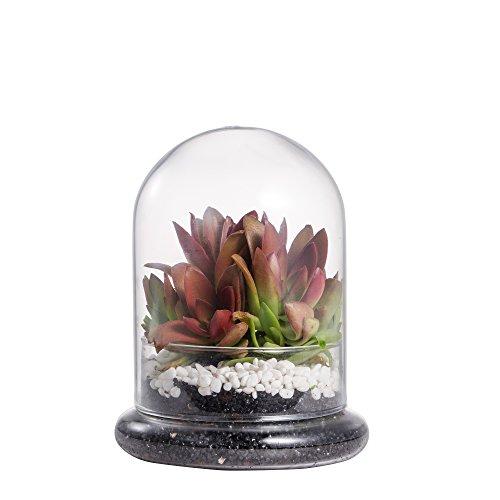 Terrarium Cloche Glaskuppel Display Case mit AIR Loch für Miniatur Succulents Aufbewahrung (Zucker Schädel Hochzeit)