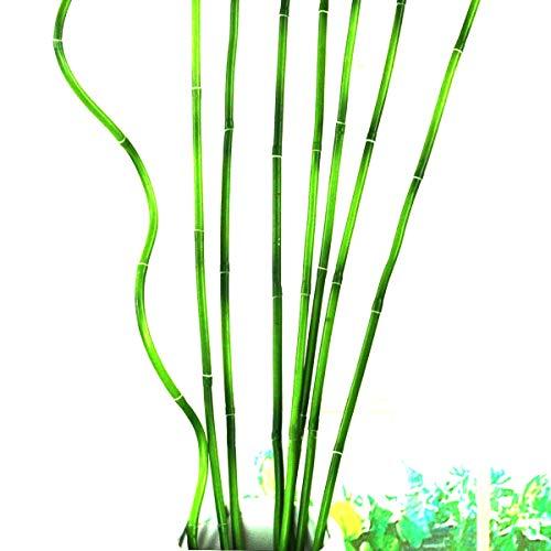 Goodangie005x 58,4cm Grün Lucky Bambus Eisen Wires Künstliche Blumen Abriss Stiel Handgefertigt DIY Craft Home Hochzeit Dekoration 60cm * 6,5mm