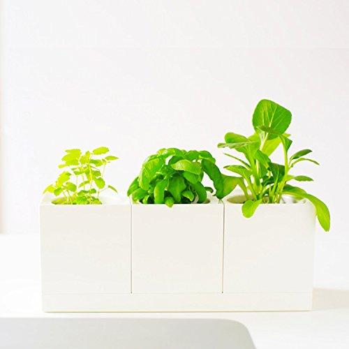 creative-modular-selfwatering-blanco-juego-de-macetas-cuadradas-para-supermercado-hierbas-y-todas-la