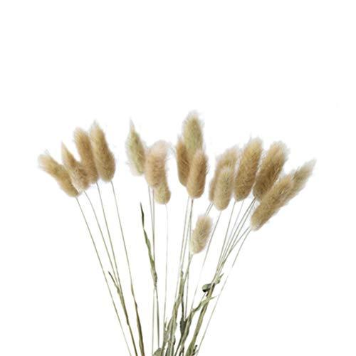 Vosarea 20 stücke Natürliche Getrocknete Blumen Bunte Lagurus Ovatus Echte Blumenstrauß für Zuhause Hochzeitsdekoration Kaninchen Schwanz Gras Bündel (Grundfarbe) -