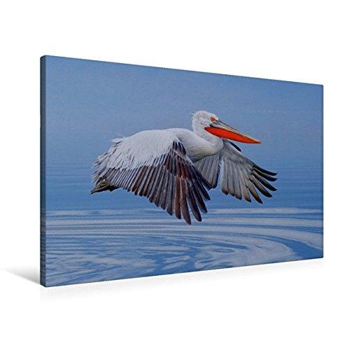 Preisvergleich Produktbild Premium Textil-Leinwand 90 cm x 60 cm quer, Krauskopfpelikan | Wandbild, Bild auf Keilrahmen, Fertigbild auf echter Leinwand, Leinwanddruck (CALVENDO Tiere)