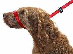 Hundeleine. Abbildung Von 8 Hundeleine. 3 Arten Von Hundeleine In 1 Produkt. Stoppt Hund Ziehen. Rot
