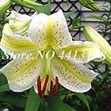 300 pcs/Sac Exotique Bonsai Pot Toad Lily Plante d'extérieur Blooming aromatiques Lilum Ornements Fleurs pour Jardin Facile à cultiver: 18