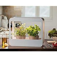 Romberg 16294399 Mini-Garten mit LED-Beleuchtung, Weiß, 50,5 x 21 x 40 cm