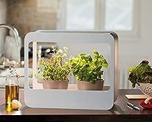 Romberg 16294399 Mini Giardino con Illuminazione a LED, Bianco, 50,5 x 21 x 40 cm