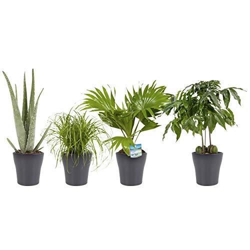 Kit 4 Plantas en Maceta Decorativa