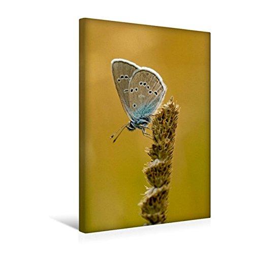 Preisvergleich Produktbild Premium Textil-Leinwand 30 cm x 45 cm hoch, Ein Motiv aus dem Kalender Schmetterlinge - fliegende Schönheiten   Wandbild, Bild auf Keilrahmen, ... Leinwand, Leinwanddruck (CALVENDO Tiere)