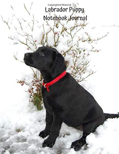 Labrador Puppy Notebook Journal: 109 Blank Lined Pages Softcover Notes Journal, 8.5 x 11 Inch, Premium Glossy Cover - Black Lab Puppy