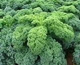 seekay chou frisé ' KADET ' ( chou kale ) environ 100 graines - Légumes