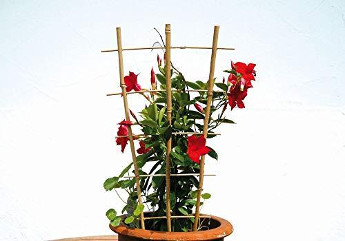 Floraworld Farbe