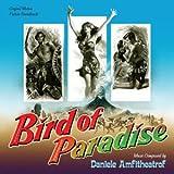 Geschenkideen Bird-Of-Paradise-zornigen-Schwarze