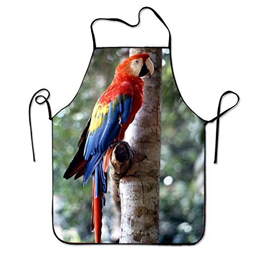 - Fun Parrot Hat