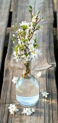 Banner - Thema: Frühling / Sommer - Blumenvase - 180cmx90cm - zum Hängen & Dekorieren