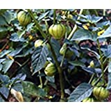 Bobby-Seeds BIO-Samen Tomatillo Grün Portion