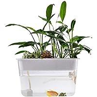 Jannyshop Pescado Verduras Simbiótico Ecológico Libre de Agua Escritorio Pecera Tortuga Transparente Pecera Crece Plantas