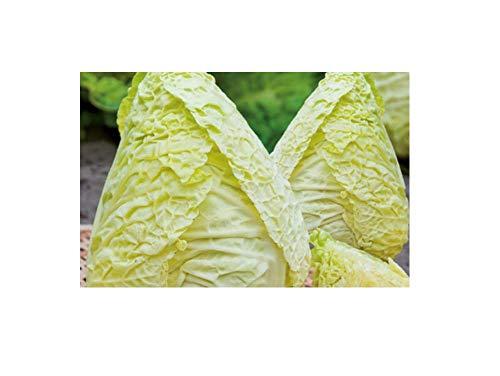 65x Wirsingkohl Bloemendälischer gelbe EKO- Kohl sonstiger Samen Gemüse K492