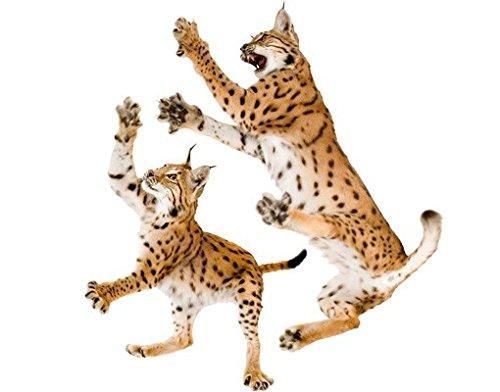 Tattoo-lynx (Wandbild Aufkleber No. 372Pride of Lynx Set, Wandtattoo, Wandaufkleber, Tattoos, Wand Aufkleber)