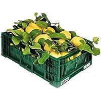 ZITRONEN NICHT BEHANDELT - Garantiertes Schalen-essbares - Digital-Garten BIO - Produkte in Kalabrien - ITALIEN (9)